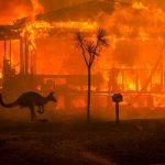 On Australia's Bushfires