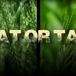 Culture Wars and the Wheat and the Tares